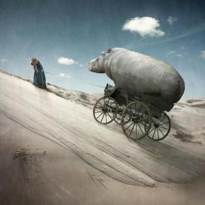 Hippopotame (1)